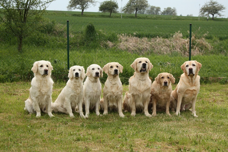 dogs-733956_960_720